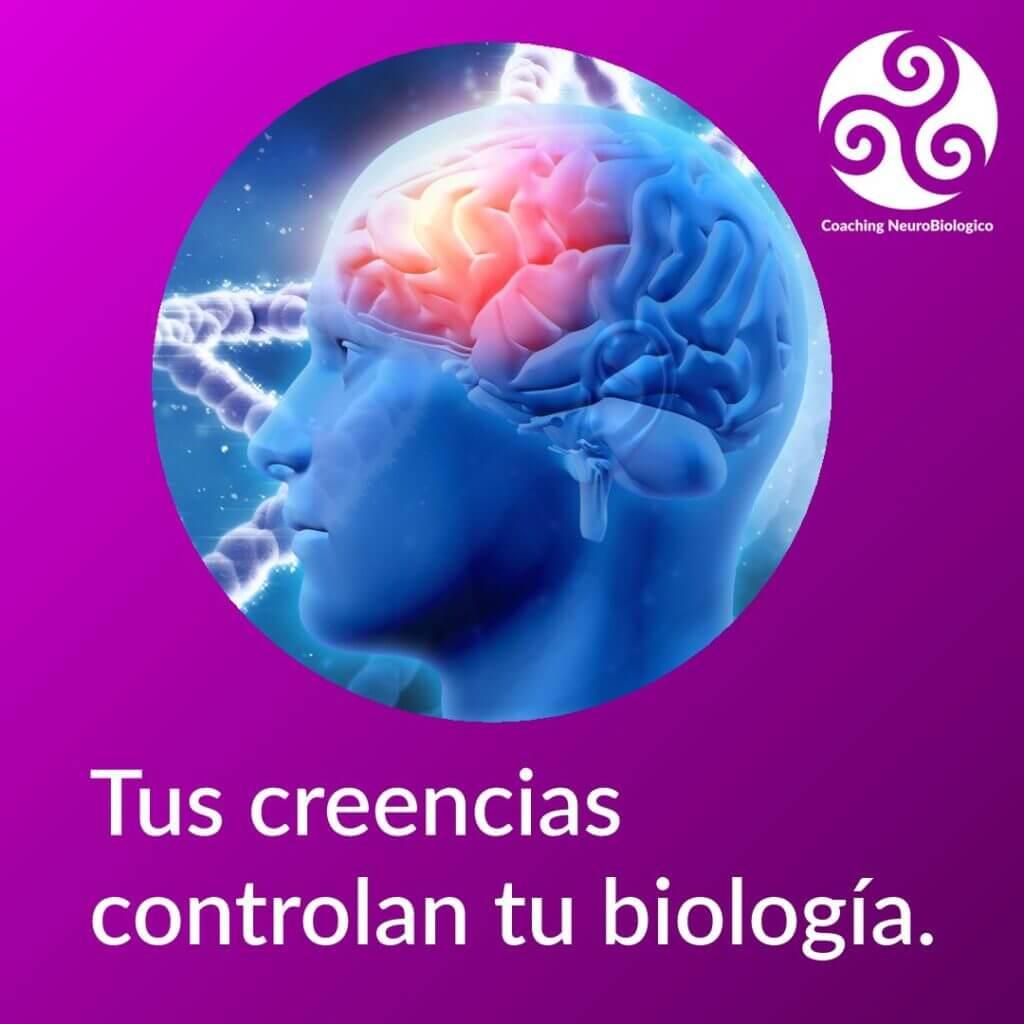 Creencias y biología