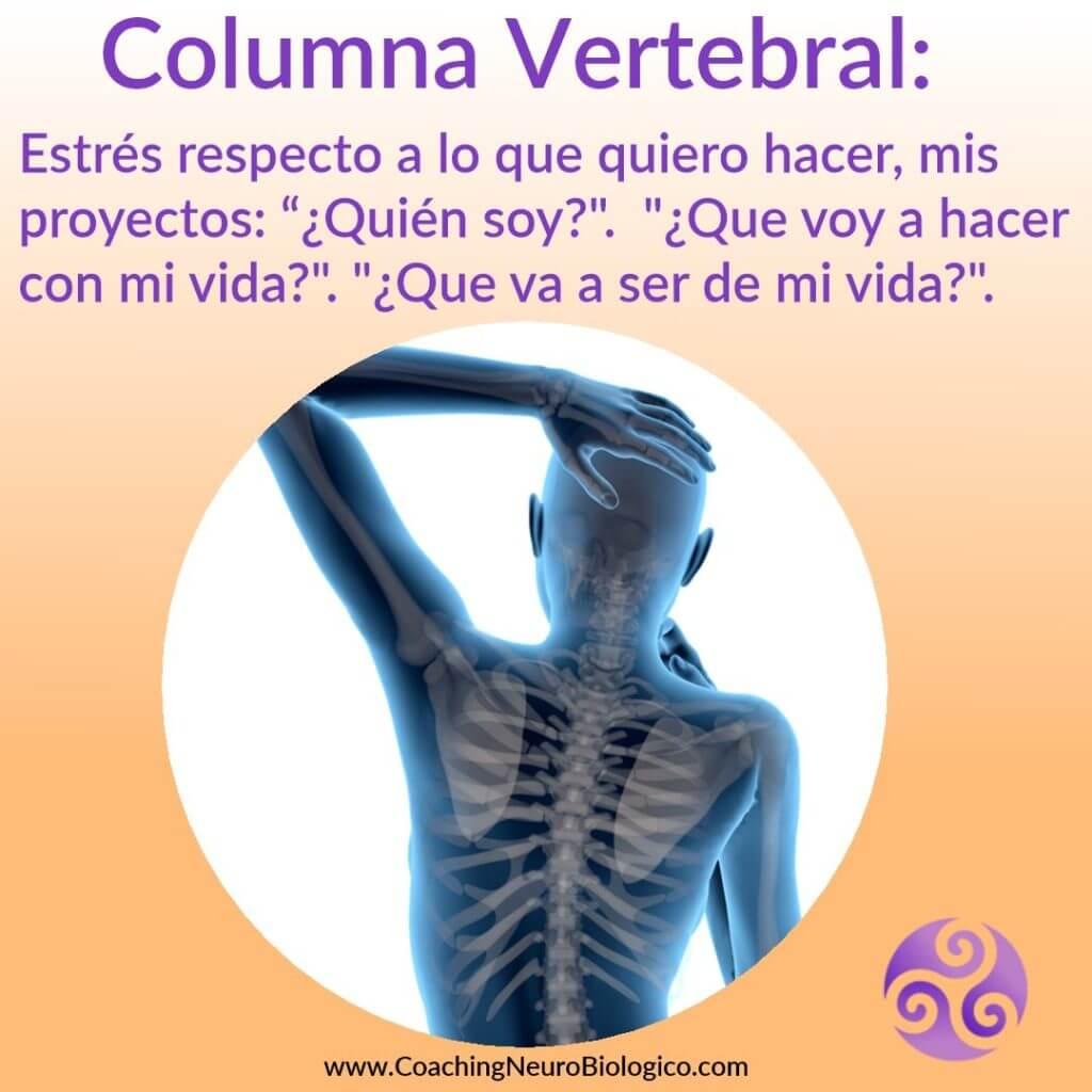 columna vertegral