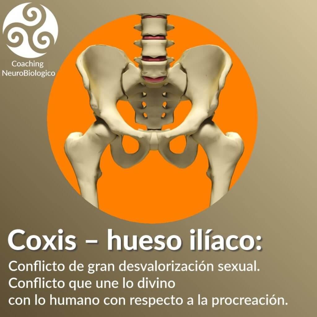 Coxis