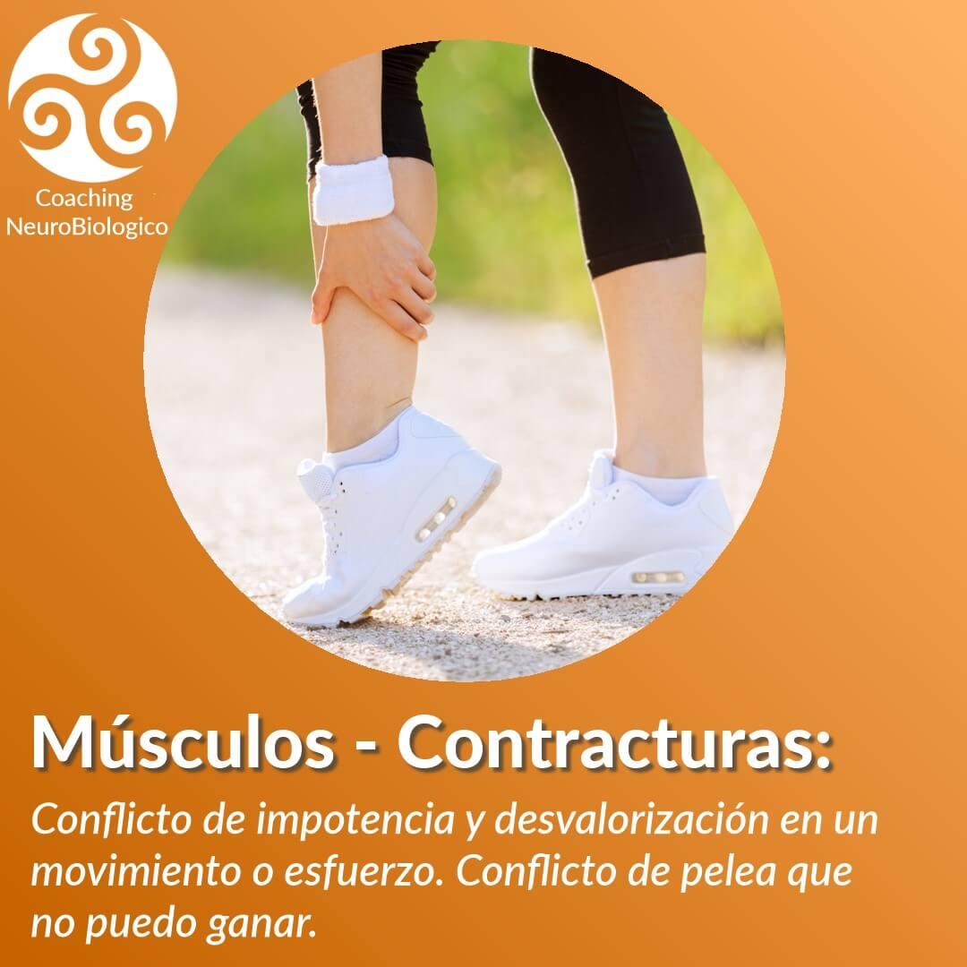 Musculos Contractua