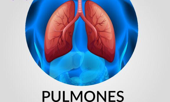 Pulmones